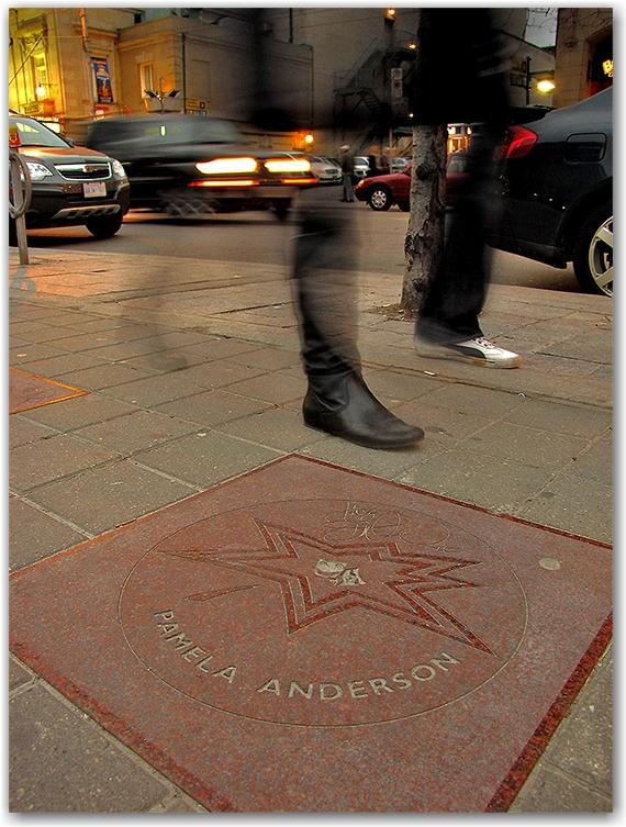 pamela anderson, canada's walk of fame, plaque, sidewalk, concrete, entertainment district, king street west, toronto, city, life