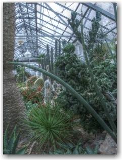 allan gardens mid-winter