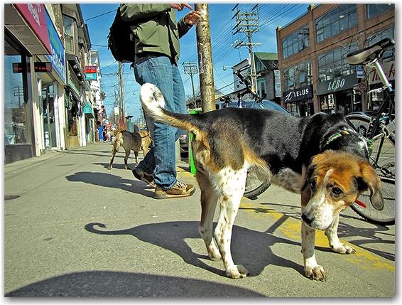 dogs, the beach, neighbourhood, neighborhood, district, queen street east, toronto, city, life