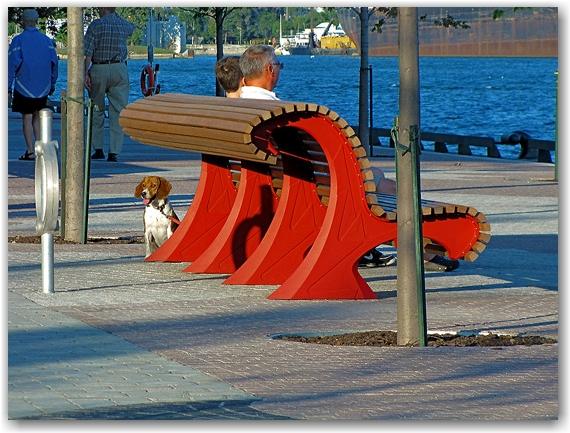 beagle, bench, sugar beach, toronto, city, life