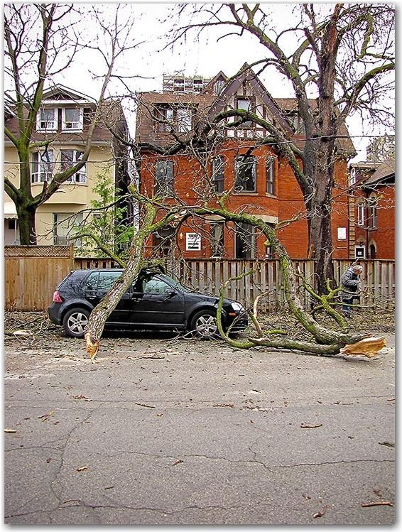 high winds, accident, branch, tree, broken, smashed, toronto, city, life, blog