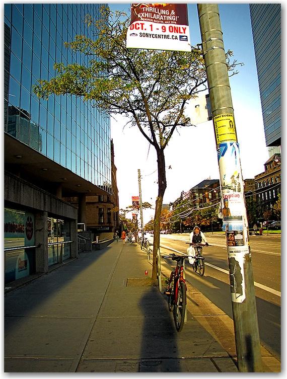 college street west, autumn, sunset, toronto, city, life