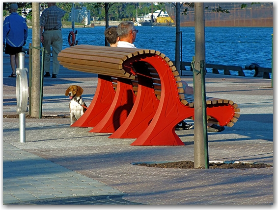 beagle, bench, sugar beach, toronto, city, life
