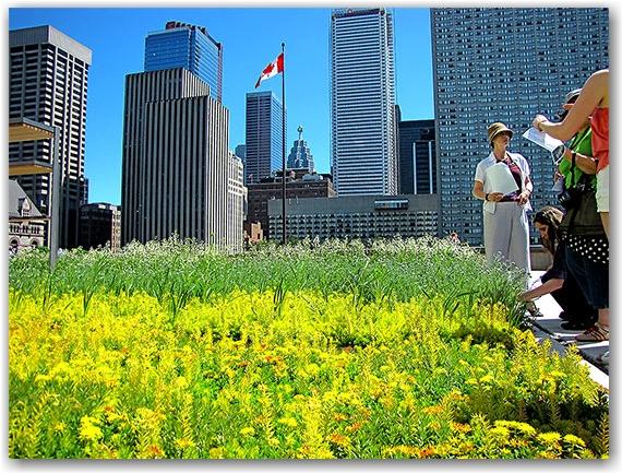 garden, tour group, podium, city hall, toronto, city, life
