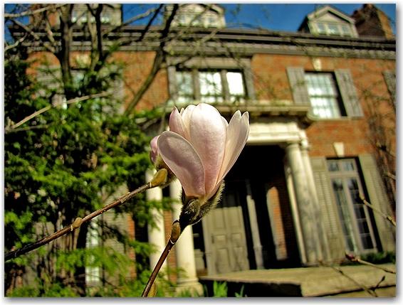 rosedale, historic house, flower, bloom, bud, toronto, city, life