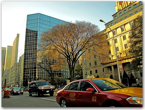 tree, buildings, street, taxi, cars, bloor street west, toronto, city, life