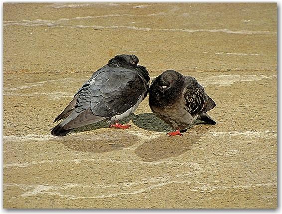 pigeons, nathan phillips square, city hall, sunshine, spring, toronto, city, life, blog
