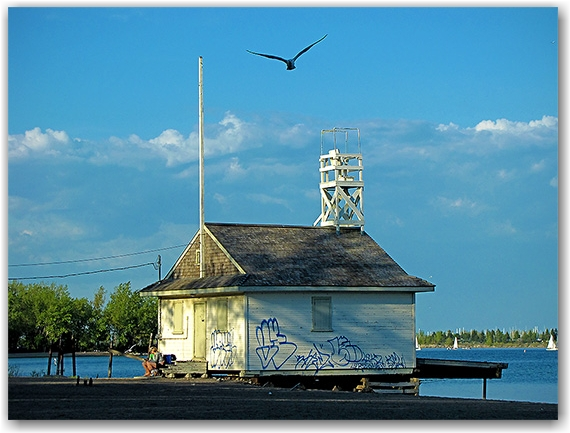 cherry beach, beach house, graffiti, seagull, toronto, city, life