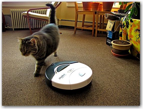 roomba, 400s, irobot, ollie, oliver, cat, apartment, flat, vacuum cleaner, toronto, city, life
