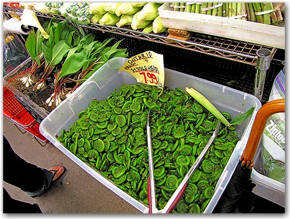fiddleheads, ferns, vegetables, st. lawrence market, toronto, city, life