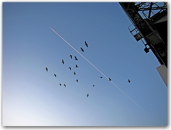 canada geese, migration, vapour trails, cherry street, bridge, docks. lake ontario, sunset, skyline, toronto, city, life