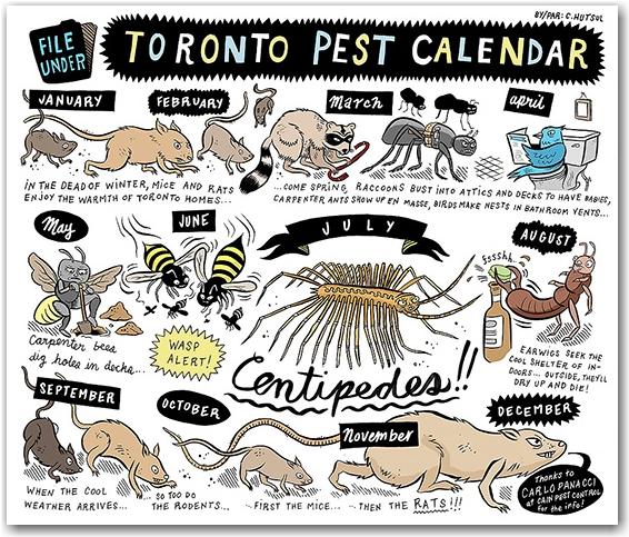 pest, calendar, toronto, hutsulville.com, chris hutsul, city, life