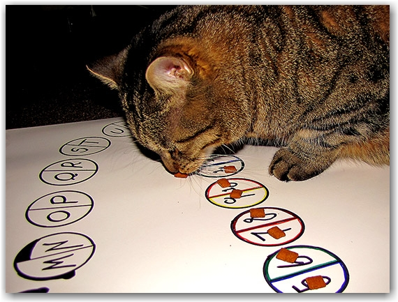 cat, oliver, ollie, predictions, 2010, psychic, ouija, toronto, city, life