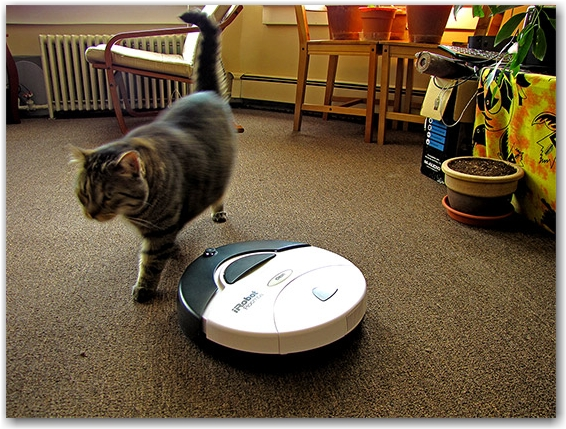roomba, 400s, irobot, ollie, oliver, cat, apartment, flat, vacuum cleaner, toronto, city, life