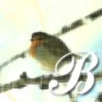 http://www.torontocitylife.com/2009/04/01/buds/