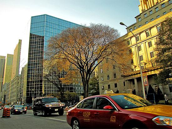 tree, buildings, street, taxi, cars, bloor street west, toronto, city, life