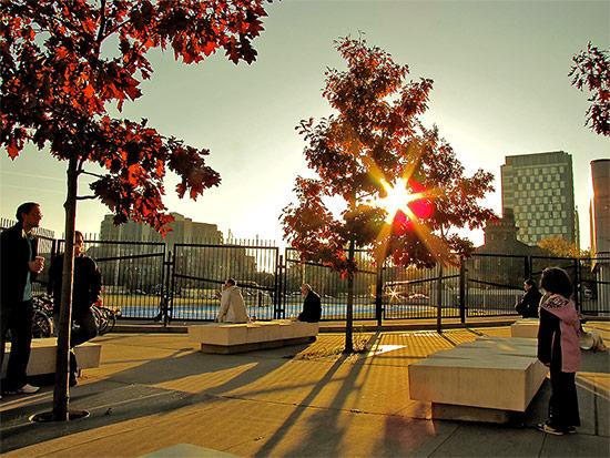 tree, trees, sunlight, shadows, varsity arena, bloor street west, annex, unversity of toronto, toronto, city, life