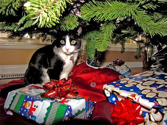 cat, christmas tree, gifts, presents, toronto, city, life